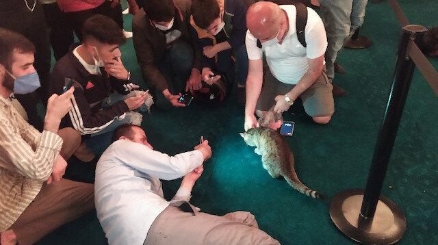 18 yıldır Ayasofya'da yeniden meşhur oldu: Cemaat dünyaca ünlü kedi Gli'nin fotoğrafını çekmek için birbiriyle yarışıyor