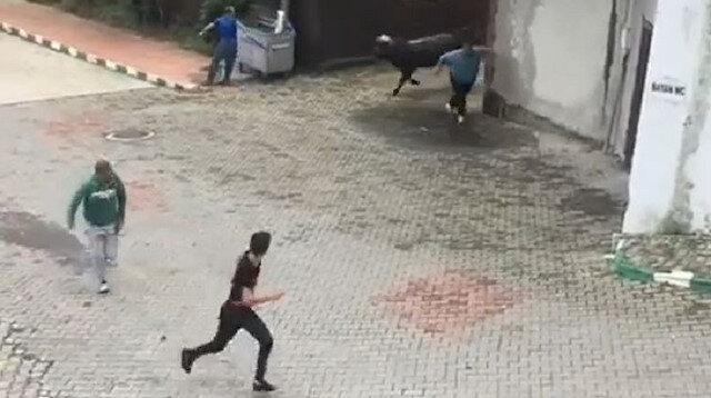 Rize'de ahırdan kaçan kurbanlık boğa önüne geleni kovaladı