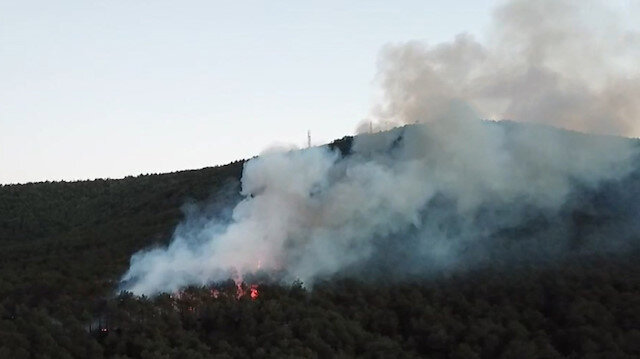 Ataşehir Kayışdağı'nda orman yangını çıktı