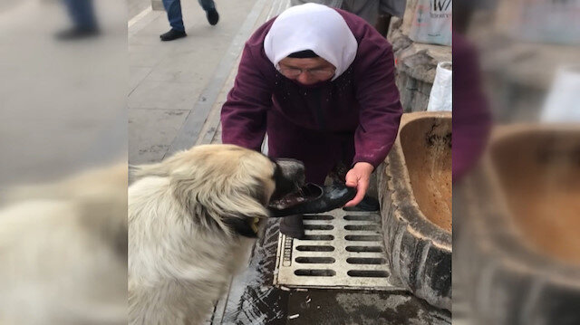 Yaşlı kadın sıcaktan bunalan köpeğe lastik ayakkabısını çıkarıp onunla su içirdi