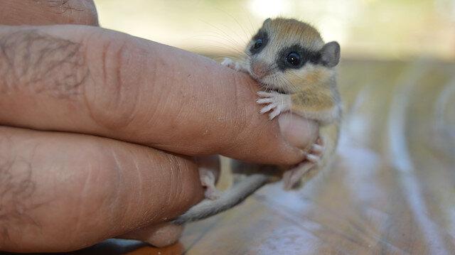 Afyonkarahisar'da bahçede bulunan hayvan şaşırttı: Yılın 7 ayı uyuyor