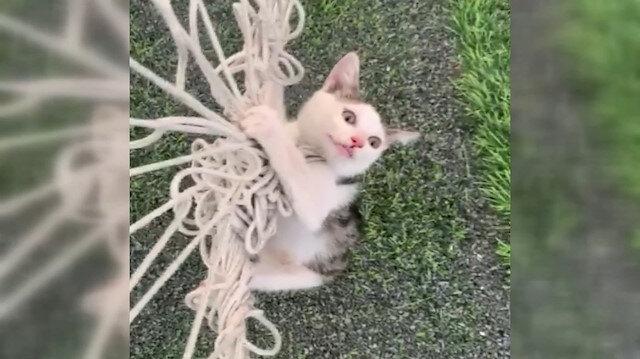 Halı sahada kalenin filesine başı dolanan yavru kedi kurtarıldı