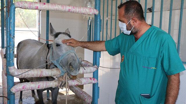 Atlar koronavirüse karşı antikor üretiyor: Dünyada ilk kez denendi, 45 günde ilk aşama tamamlandı