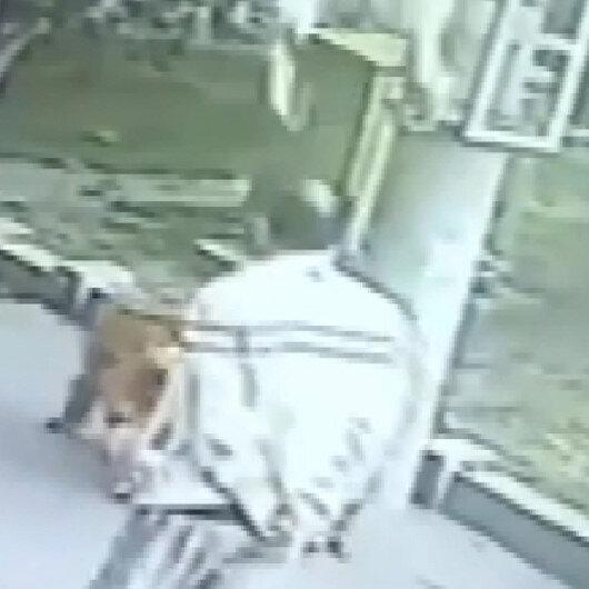 Başına komşusunun kedisi düştü, 23 gün hastanede kaldı: İlginç anlar kameraya yansıdı