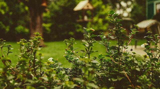 Bahçe kurma düşüncesinin dayanılmaz güzelliği