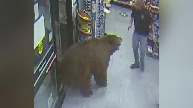 ABD'de ayı, süpermarkete zorla girerek çikolata yedi: İlginç görüntüler kamerada