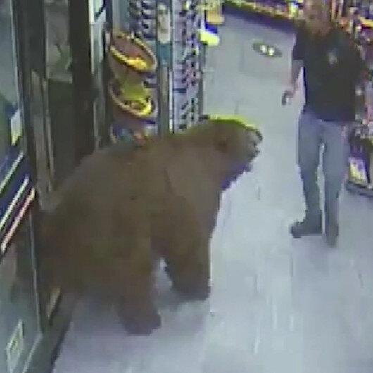 ABDde ayı, süpermarkete zorla girerek çikolata yedi: İlginç görüntüler kamerada
