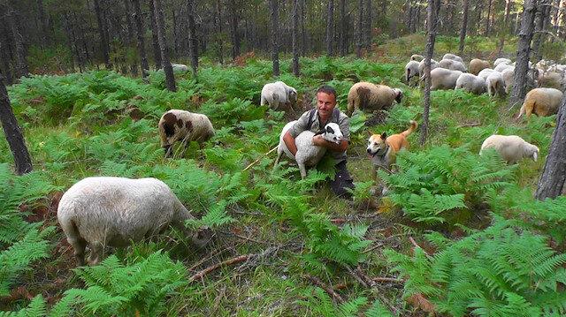 Ankara'da müdürlük yaptıktan sonra istifa etti: Köyüne dönüp koyunlara bakıyor