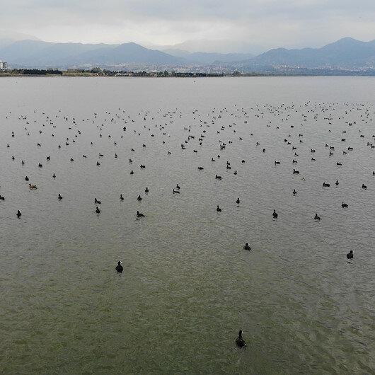 Kocaelide denizin üstünü yüzlerce kuş kapladı