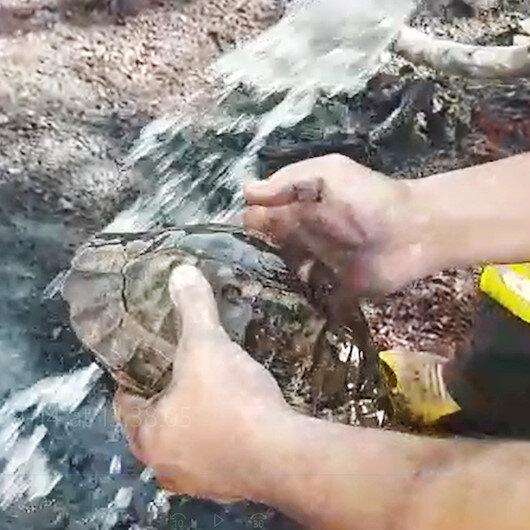 Fethiyede yangın ortasında kalan kaplumbağayı itfaiyeciler kurtardı