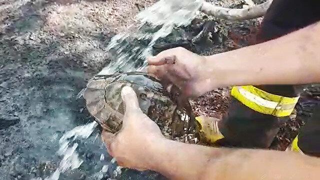 Fethiye'de yangın ortasında kalan kaplumbağayı itfaiyeciler kurtardı