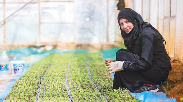 Güvenli bölgelerde tarım atılımı