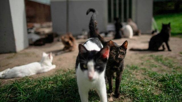 100 metrekarelik evde 110 kediyle yaşayan kiracı kovuldu