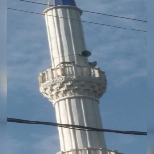 Manisada tilki cami minaresine çıktı: Kurtarmaya gelen vatandaşlardan korkup onlarca metreden aşağı atladı