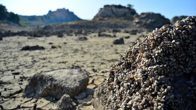 Çanakkale'de bulunan barajın suyu azaldı: Havzasından midye tarlası çıktı