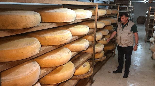 Dünya ünlü peynirlere rakip oldu: Kars kaşarı ve İsviçre'nin Appenzeller peyniri yarışır
