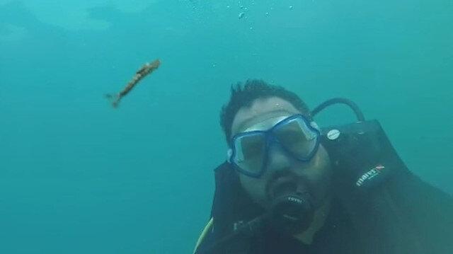 Van Gölü'nde heyecanlandıran görüntü: Yeni canlı türü görüntülendi