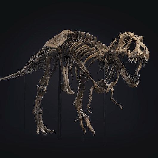ABD'de 67 milyon yıllık dinozor iskeleti 31.85 milyon dolara alıcı buldu