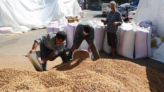Şanlıurfa'da 'yeşil altın'da üretim patlaması: Fıstıkları koyacak yer kalmadı