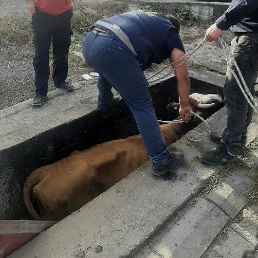 Karsta yağ değişim Kuyusuna düşen ineği itfaiye ekipleri kurtardı