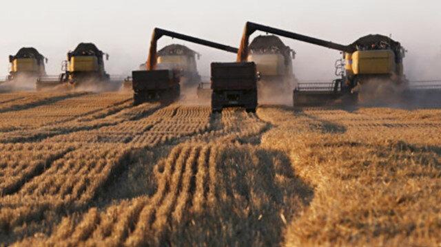 Pandemi sonrası ülkeler buğday stoklama yarışına girdi: Çin stokların yarısını elinde bulunduruyor