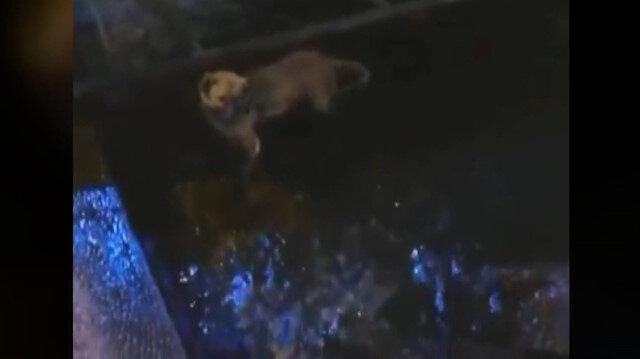 Deniz içerisinde tekneye bağlanan köpek kurtarıldı