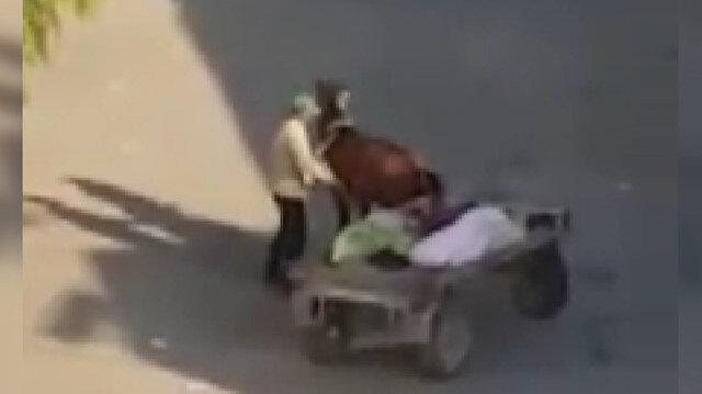 Iğdır'da yorgunluktan arabayı çekemeyen atı şişleyen vicdansız kamerada