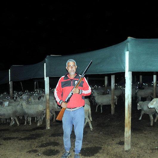 Köylüler, hayvanlara saldıran kurtlar için tüfekle nöbet tutmaya başladı