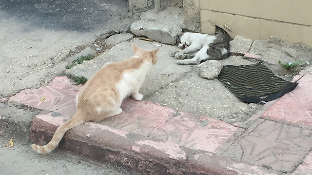 Anne kedi ölen yavrusunun başından dakikalarca ayrılmadı