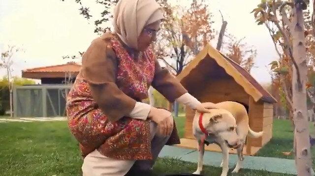 Emine Erdoğan'ın sahiplendiği engelli köpek 'Leblebi' yeni yerini çok sevdi