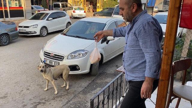 Düzce'de bir sokak köpeği lokantacının verdiği yemeği poşet içinde yavrularına taşıyor
