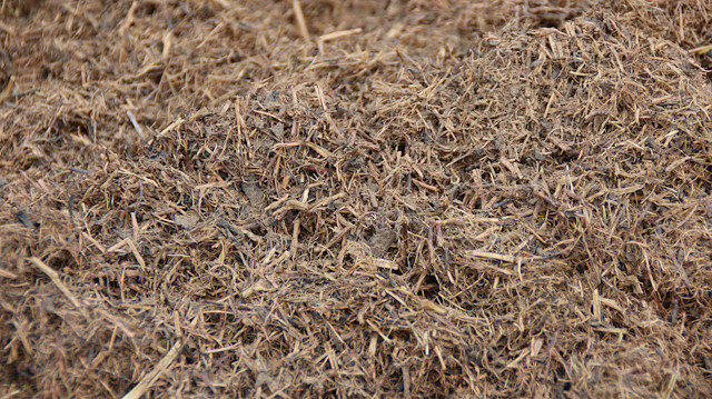Çay çöpleri toplanmaya başlandı: Elektrik ve mangal kömürü üretilecek