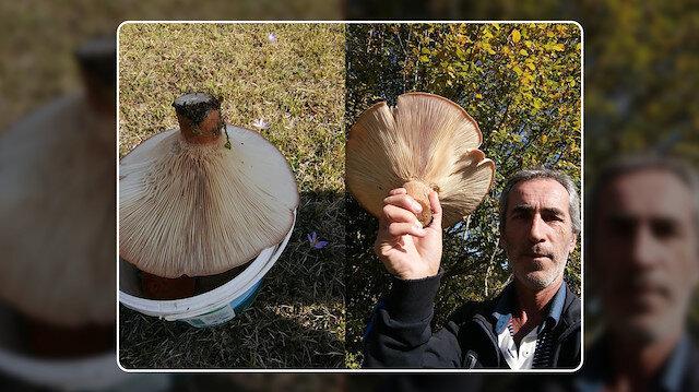 Dev mantar görenleri şaşırtıyor: Yaylada 620 gramlık mantar buldu