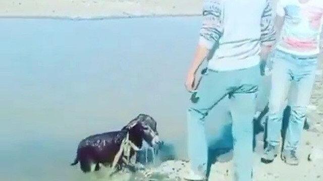 Kars'ta yavru eşeği bağlayıp göle atanlara para cezası