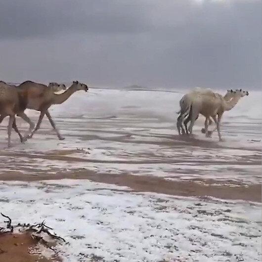 Suudi Arabistanda şaşırtan görüntü: Karla kaplı çölde develerin yürüyüşü kartpostallık görüntüler oluşturdu