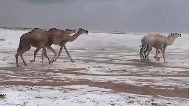 Suudi Arabistan'da şaşırtan görüntü: Karla kaplı çölde develerin yürüyüşü kartpostallık görüntüler oluşturdu