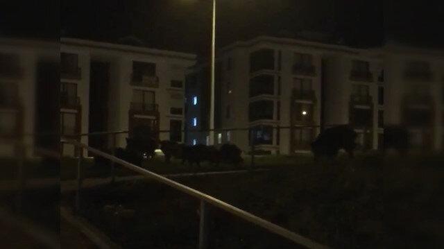 Bursa'da aç domuzlar şehre indi
