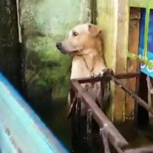Meksikada selden kurtarılan köpeğin görüntüleri viral oldu