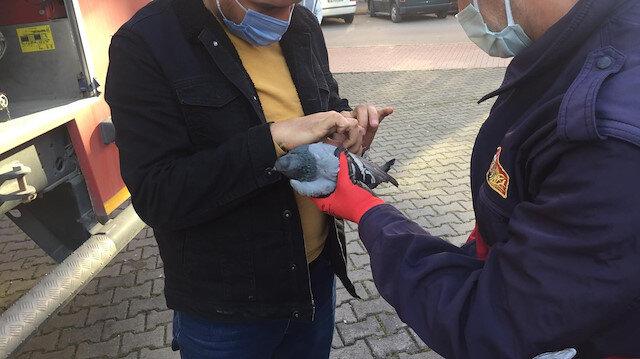 Ayağına ip dolanan güvercini itfaiye ekipleri kurtardı