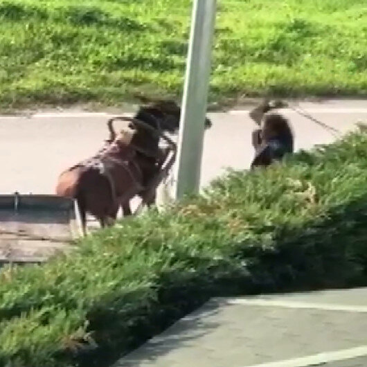 Bursada arkasındaki yükü taşımakta zorlanan atı vahşice kırbaçladı: Tepki çeken görüntüler kamerada