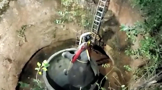 Hindistan'da 15 metrelik kuyuya düşen yavru fil vinç yardımıyla çıkartıldı