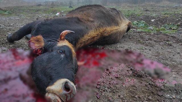 Vandallar: Terk ettikleri köyleri yakıp yıkan Ermeniler hayvanları da telef etti