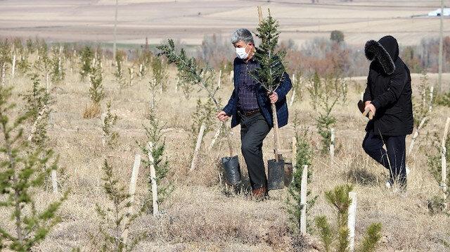 20 yılda 20 tane orman oluşturdu: Toplam 200 bin fidan dikti