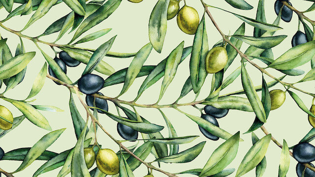 Zeytin yaprağı mucizesi: Hem koronadan koruyor hem tedavi ediyor