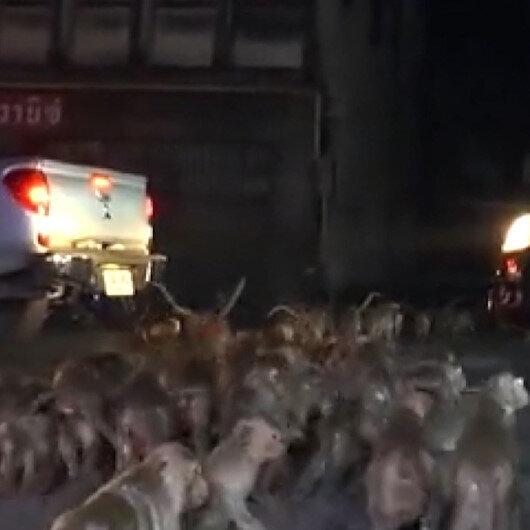 Taylandda festivalde atılan havai fişekler maymunları korkuttu: Maymunlar sokaklara kaçtı