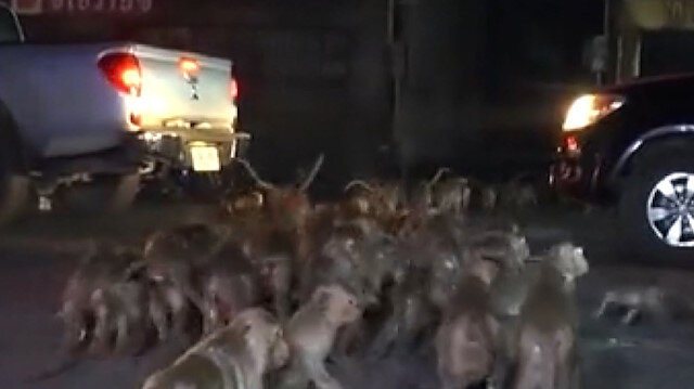 Tayland'da festivalde atılan havai fişekler maymunları korkuttu: Maymunlar sokaklara kaçtı
