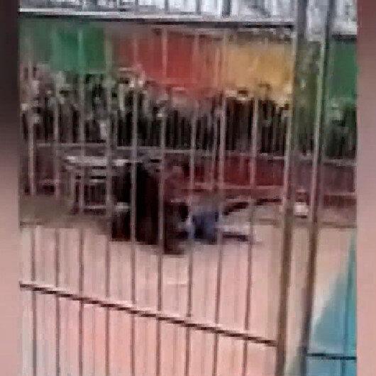 Çinde sirk kaplanı eğitmenine saldırdı: O anlar kameralara böyle yansıdı