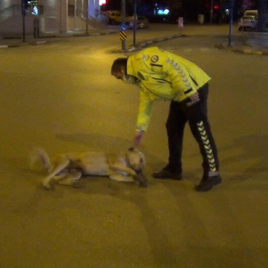 Bursada gülümseten görüntü: Köpeğin başına bir şey gelmesin diye dakikalarca yoldan kaldırmaya uğraştı