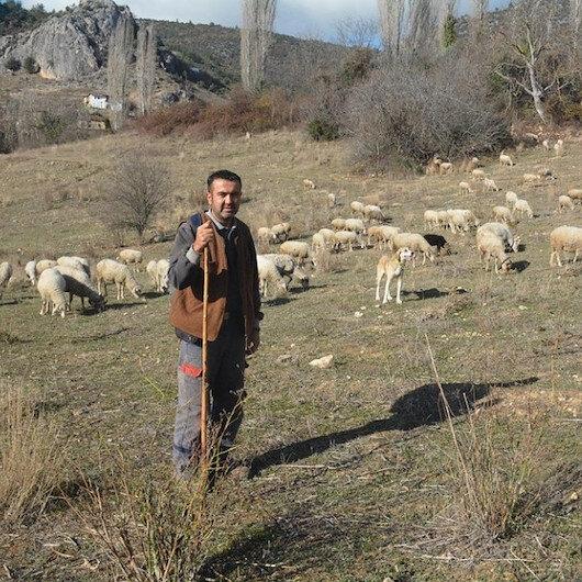 كورونا.. تركي يتخلى عن عمله الإداري ليرعى الغنم في قرية نائية