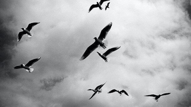 Kuşları doyuranın gölgesinde